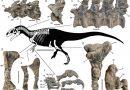 Dinosaurios: un nuevo hallazgo en Chubut da claves sobre la evolución de los terópodos