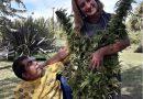#Cannabis Historias de madres, plantas y salud | «Todas las hojas son del viento»