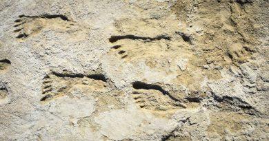 Encuentran huellas que revelarían cómo llegó el homo sapiens a América,